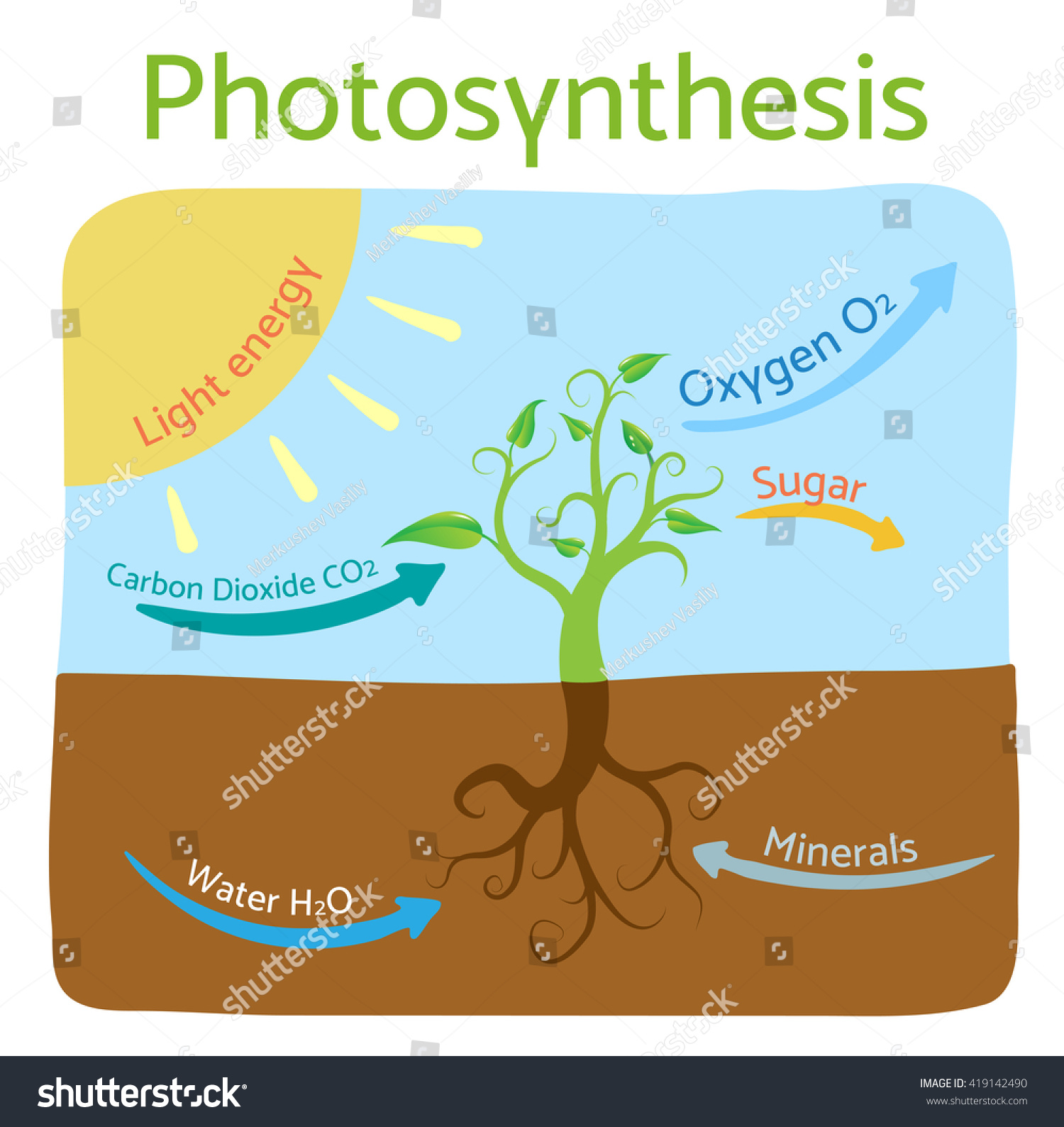 Photosynthesis diagram schematic vector illustration photosynthesis diagram schematic vector illustration of the photosynthetic process pooptronica Choice Image