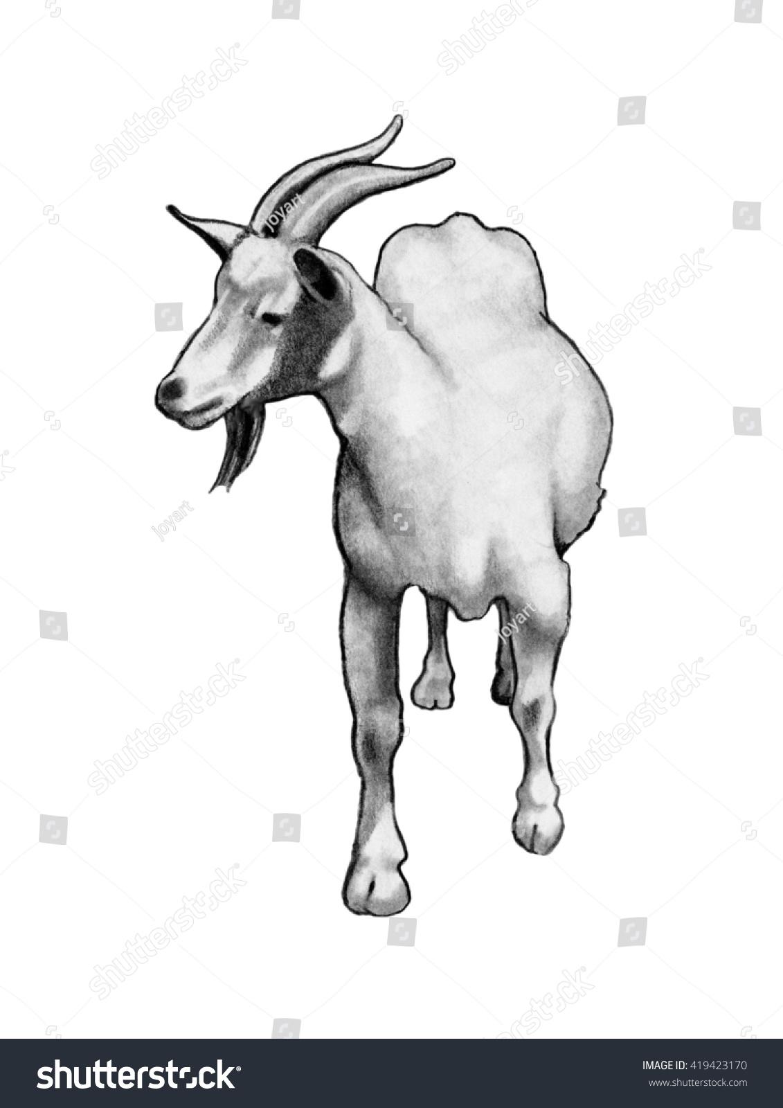 Goat farm animal in pencil drawing
