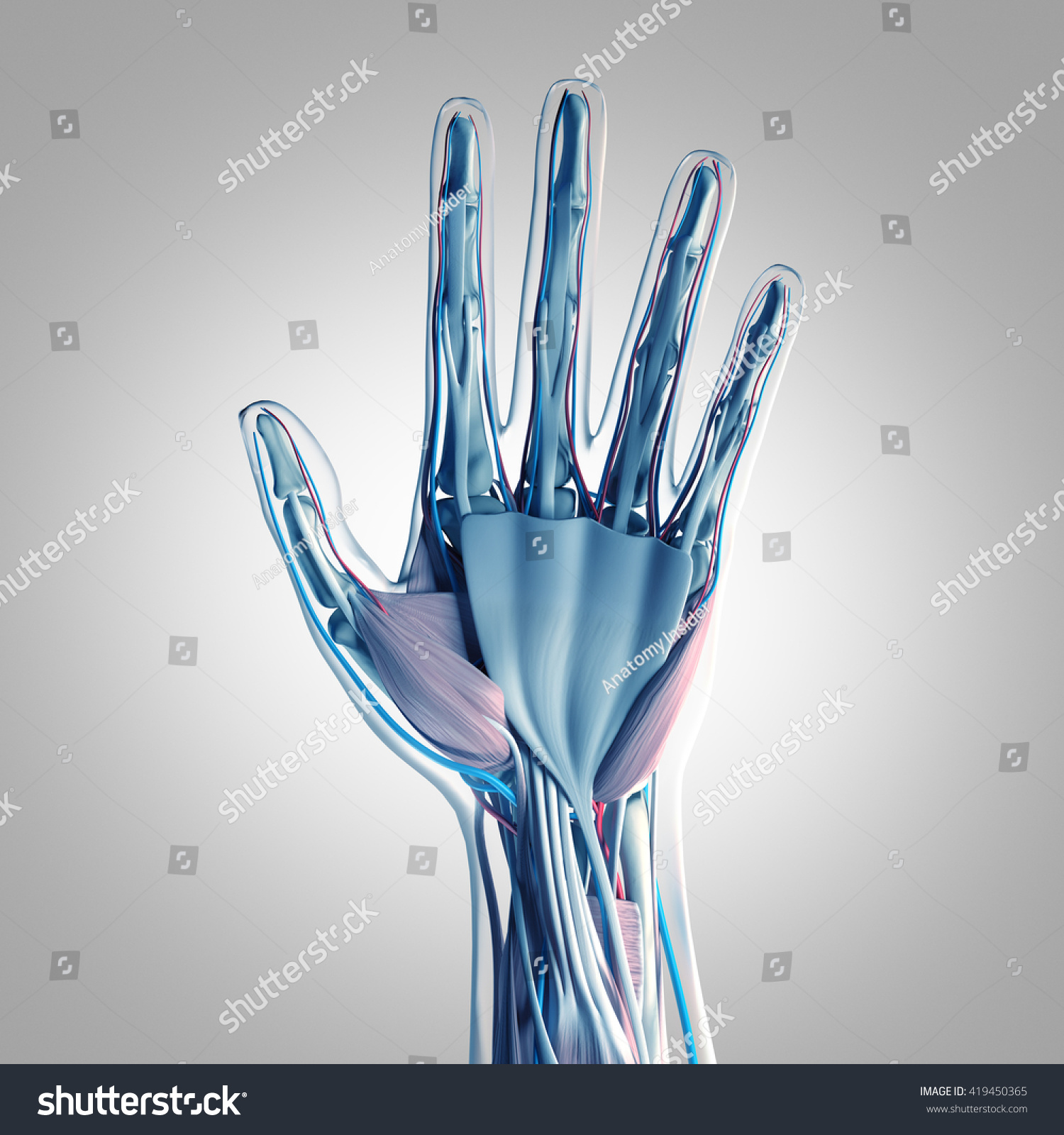 Human Anatomy Hand Palm 3 D Illustration Stock Illustration ...
