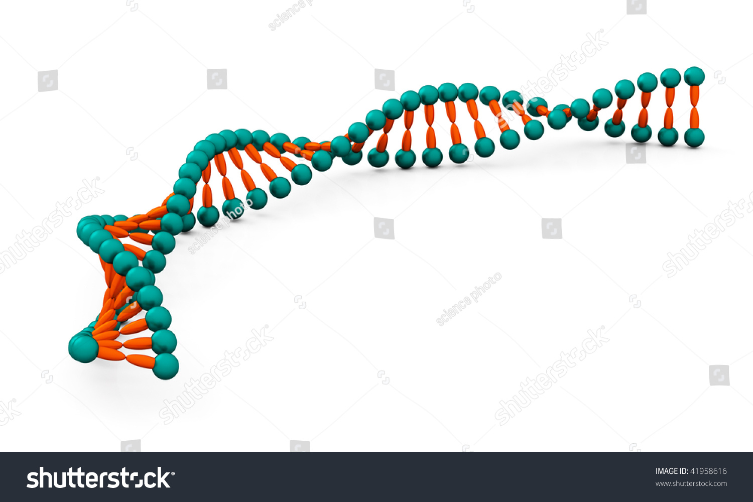 how to make a dna molecule model