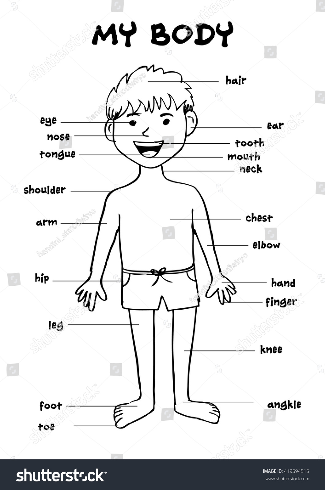 My Body Educational Info Graphic Chart Stock Vector Royalty Free
