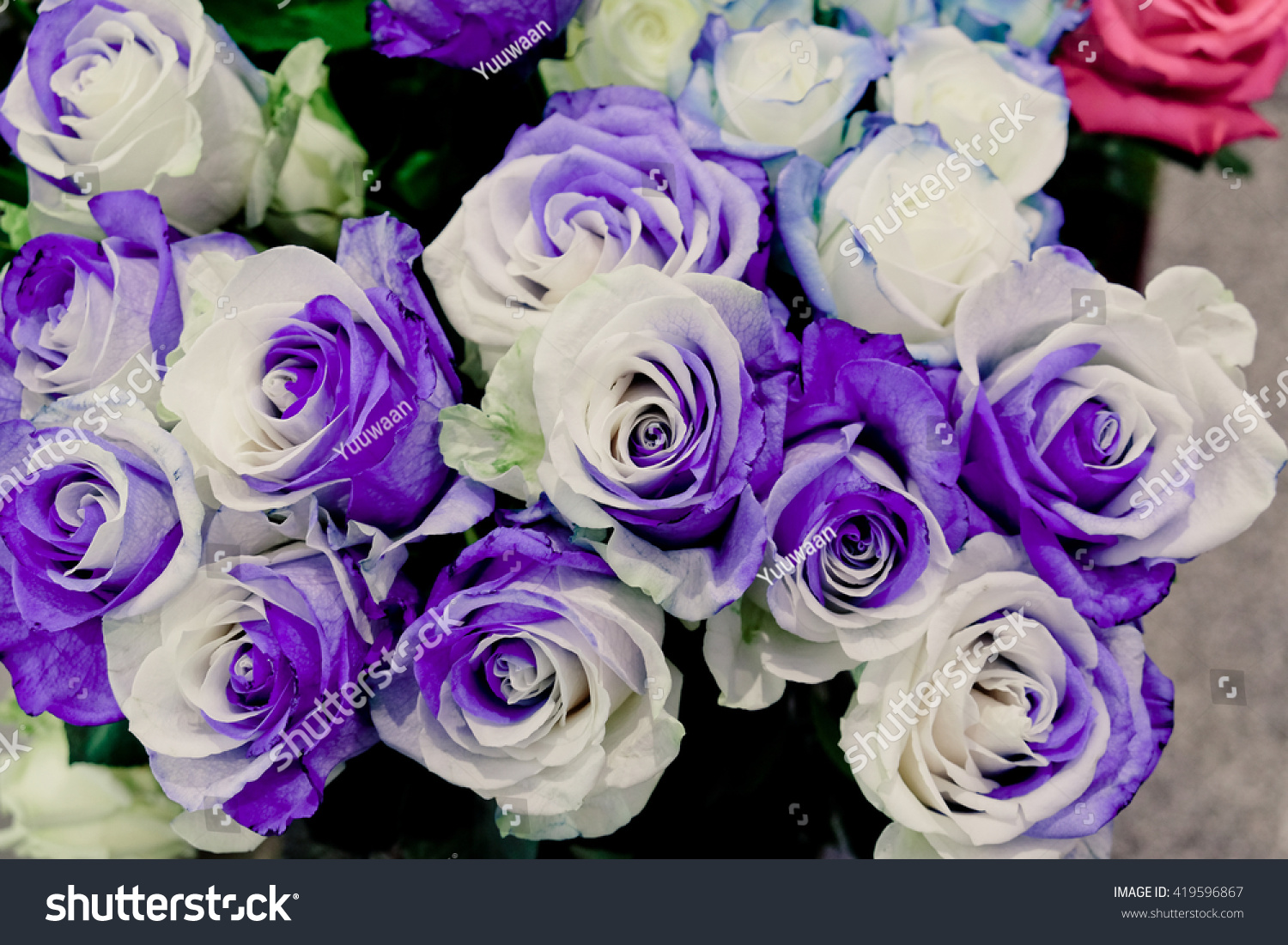 Two-tone rose hair flowers |Two Tone Lavender Roses