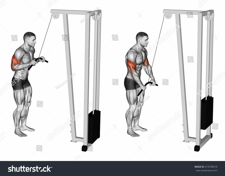Extension Hands Block Simulator Muscles Biceps Ilustración de ...