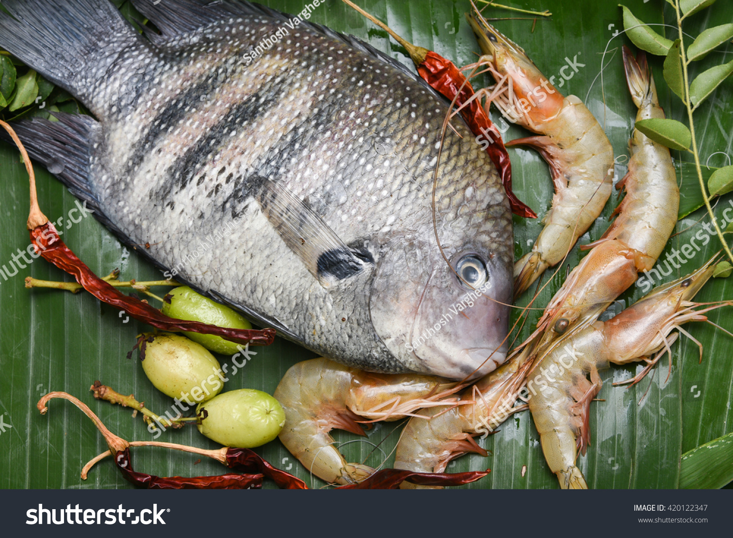 Freshwater fish kerala - Pearl Spot Fish Karimeen And Shrimp In Kerala India Fresh Raw Fish And Sea