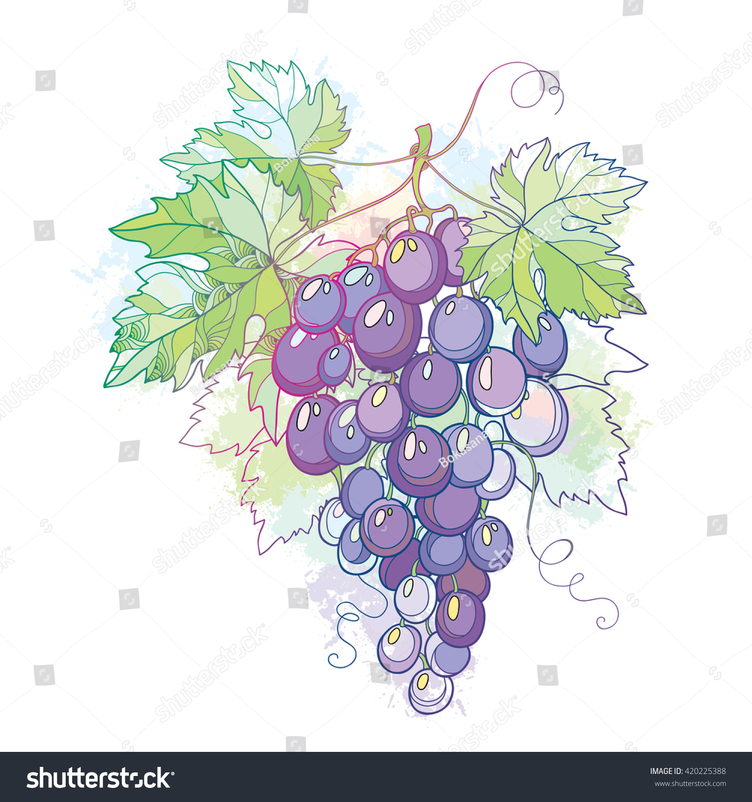 vector illustration bunch grape grape leaves stock vector