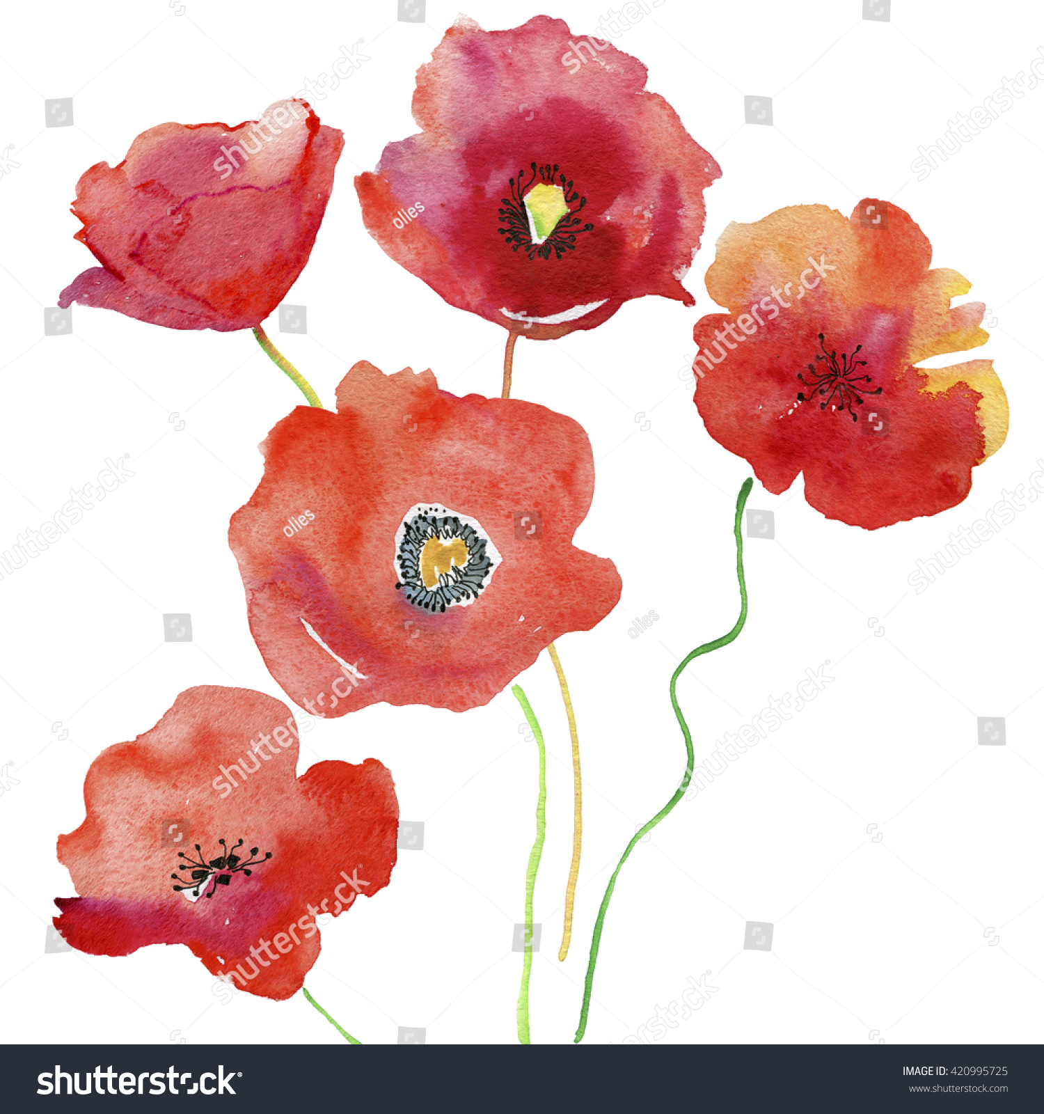Red Poppy Flowers Watercolor Painting Water Stock Illustration