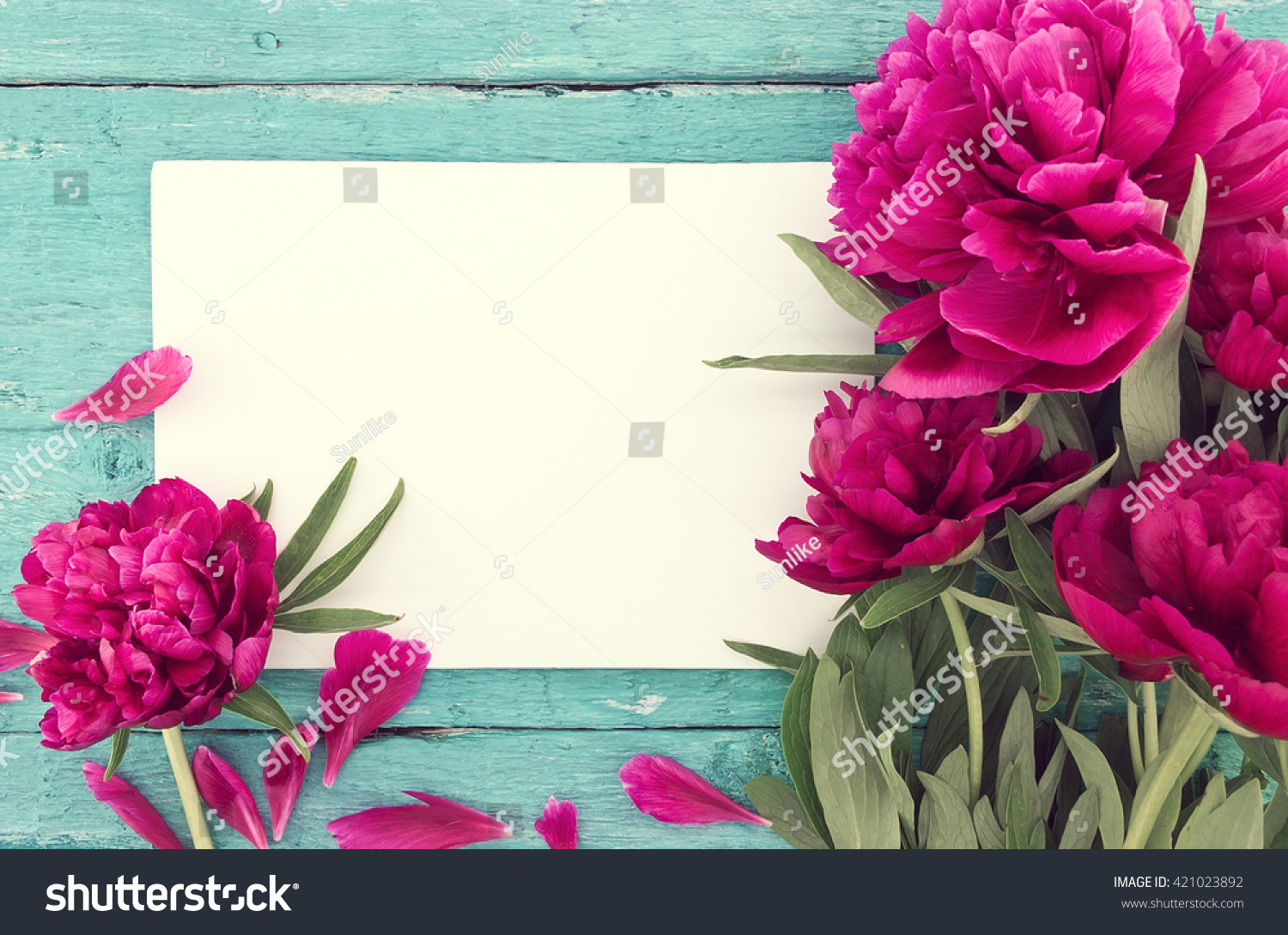 Red Peony Flowers On Turquoise Rustic Stock Photo Edit Now