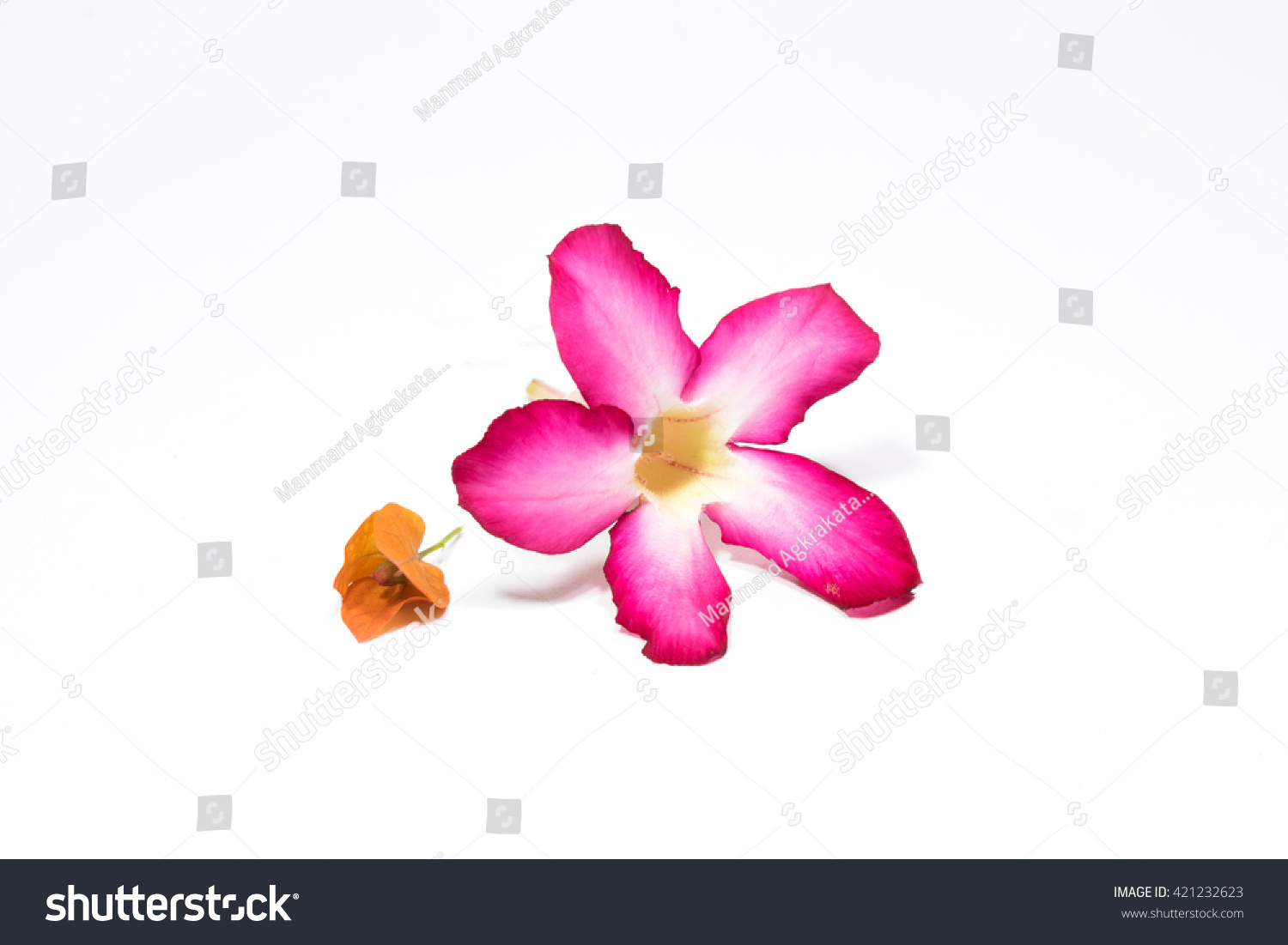 Small Orange Flower Pink Flower White Stock Photo Edit Now