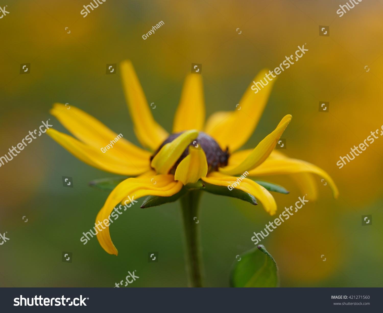 Pretty Yellow Flowers Hidden Field Stock Photo Edit Now 421271560