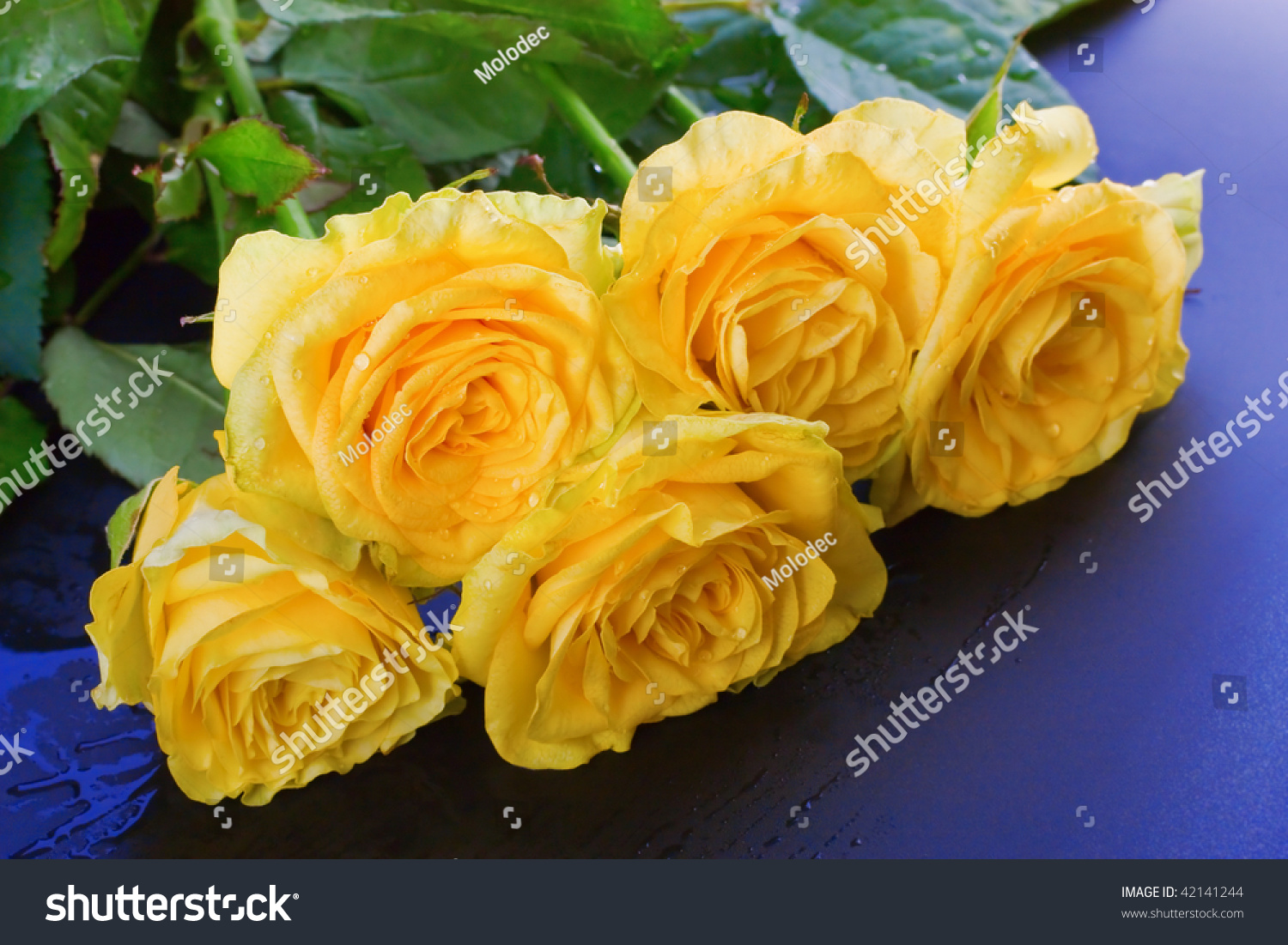 yellow roses with water drops - photo #27
