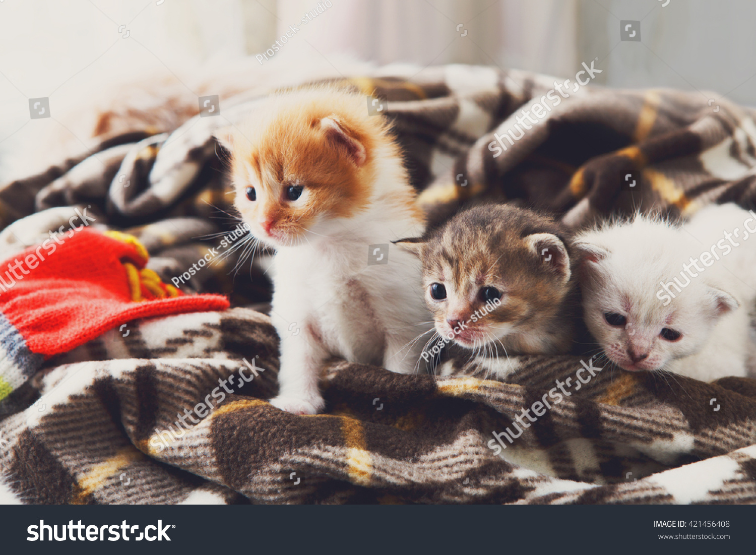 Kittens and mittens White Red and grey newborn kittens in a plaid blanket Sweet adorable tiny kittens on a serenity blue wood play with cat toy and mittens Funny kittens crawling and meowing