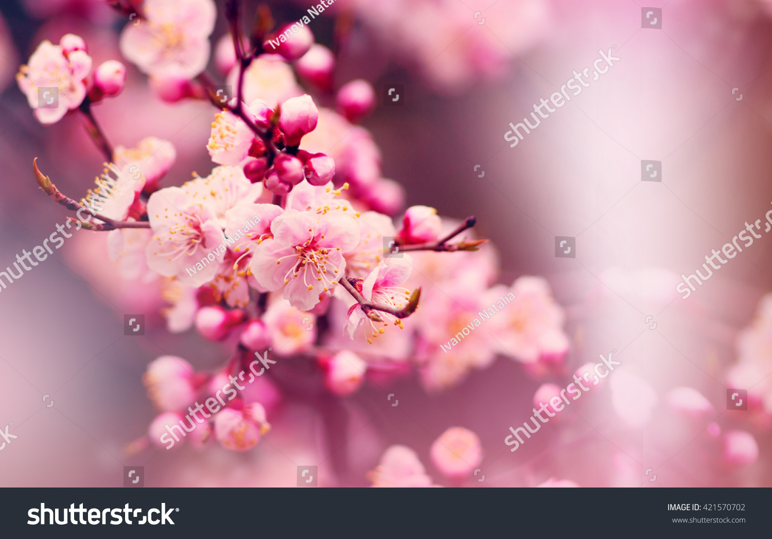 Beautiful Nature Scene With Blooming Tree And Sun Flare Spring