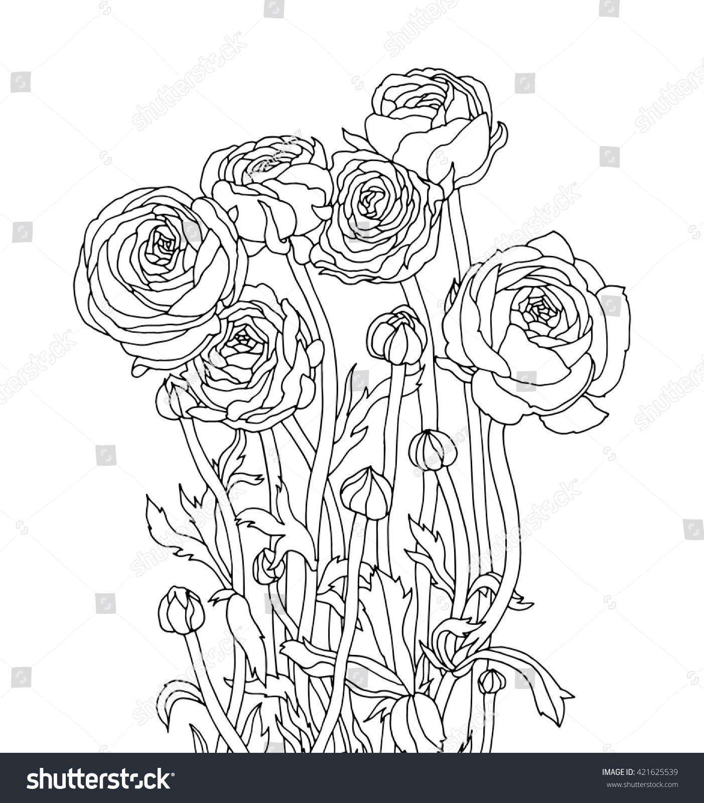 ranunculus flowers isolated floral bouquet vector stock vector