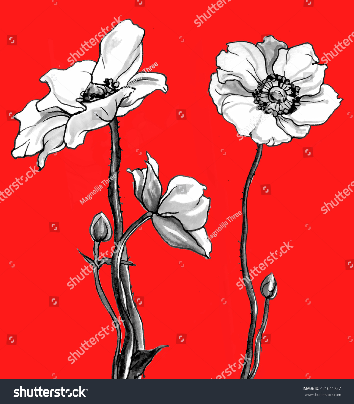Anemone Flowers Bouquet Isolated On Red Stock Illustration 421641727 ...