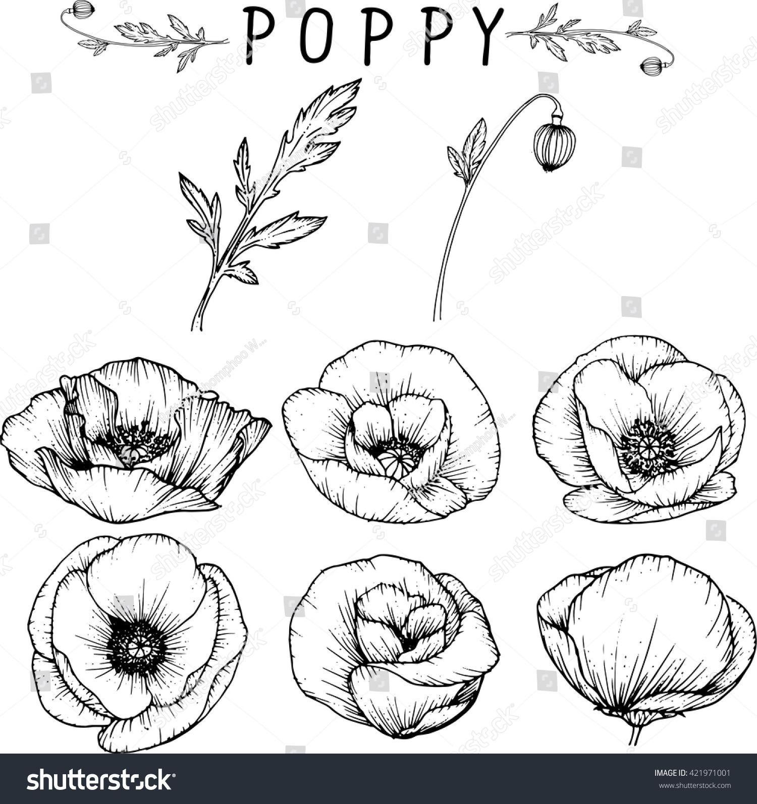 Poppy Flowers Drawings Vector Stock Vector 421971001 Shutterstock