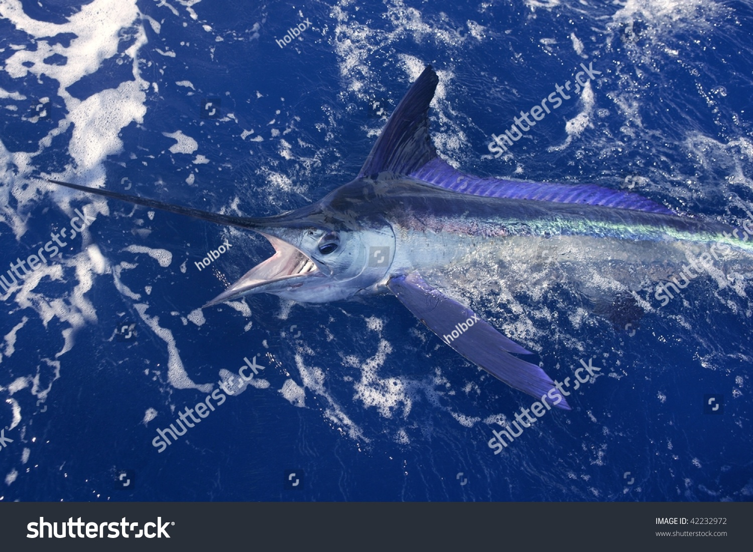 Atlantic white marlin big game sport fishing over blue for Atlantic game fish