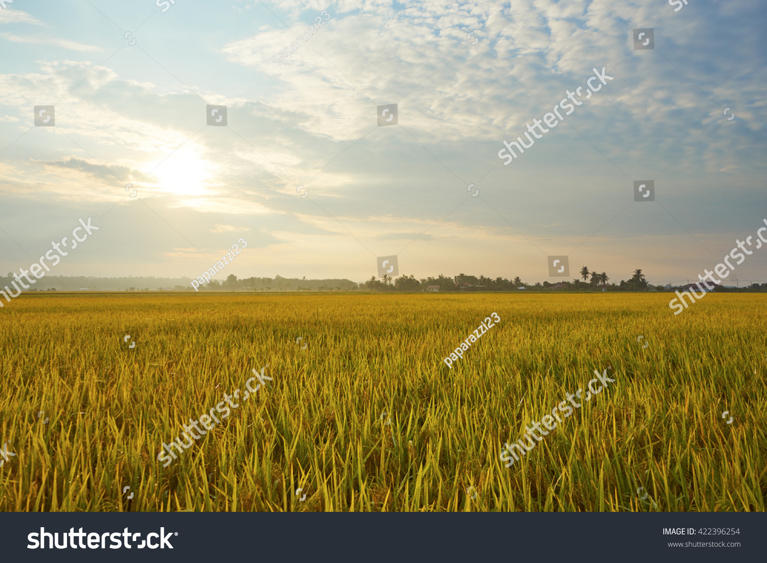 Landscape of rice field #422396254