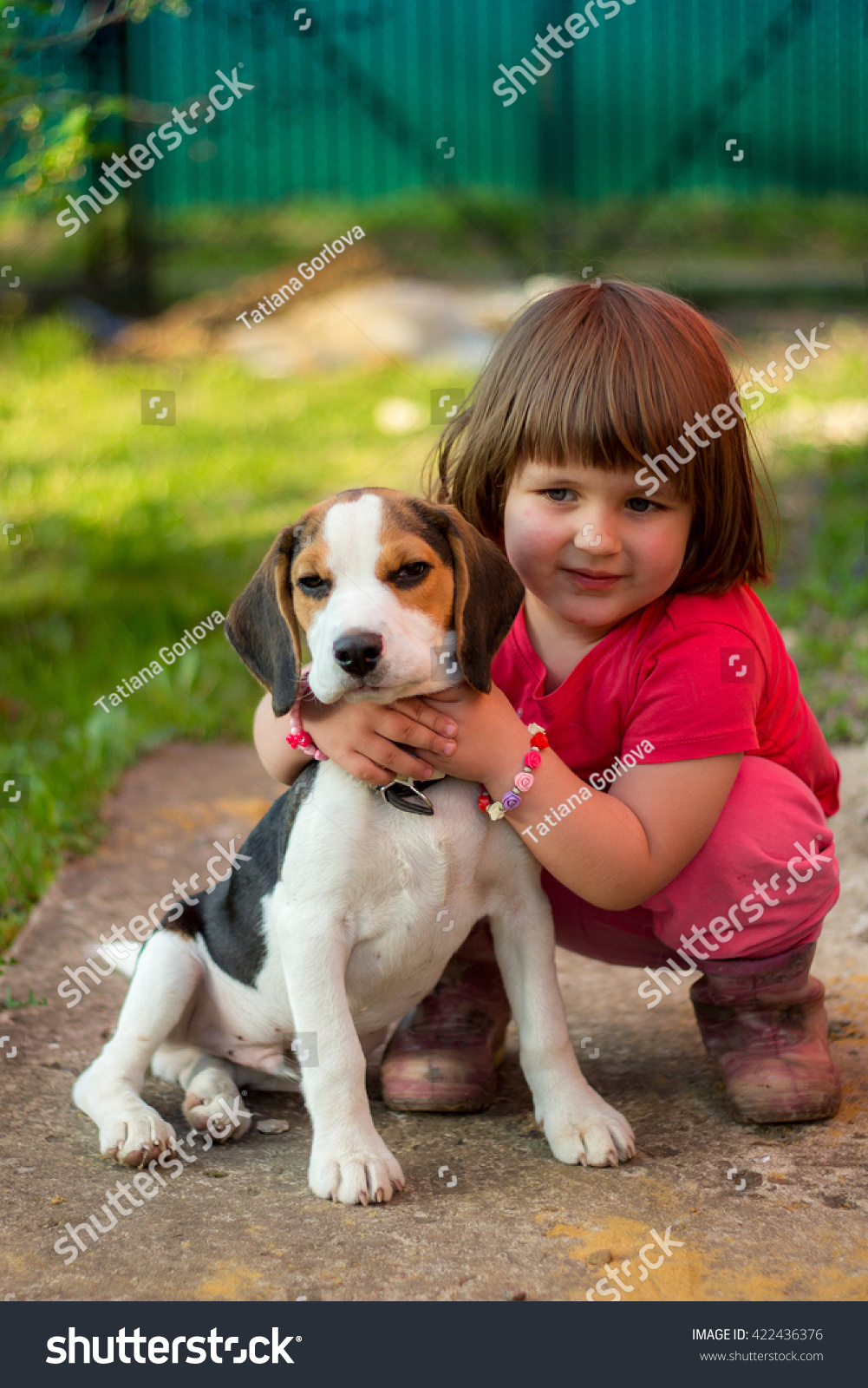 Cute Stock Photography: Cute Little Girl Beagle Puppy Stock Photo 422436376