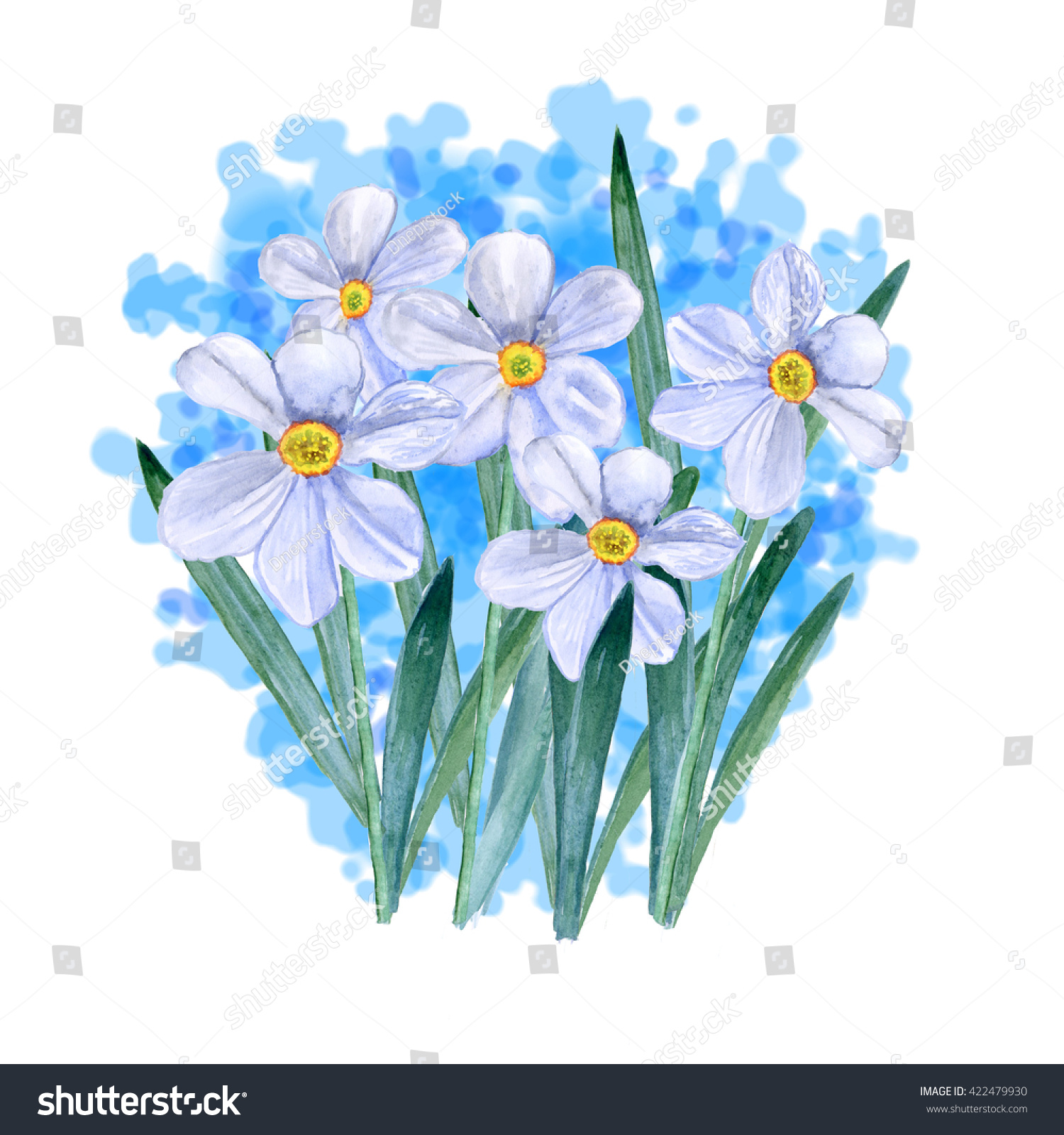 Watercolor Drawing Spring Flowers Narcissus Hand Stock Illustration