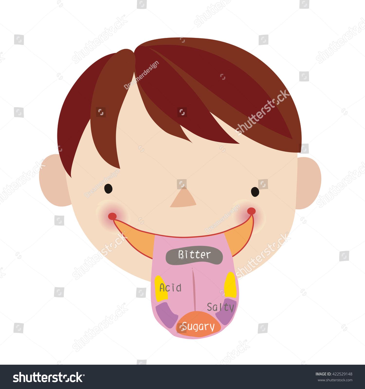 Anatomy Human Tongue Basic Tastes Stock Vector 422529148 - Shutterstock