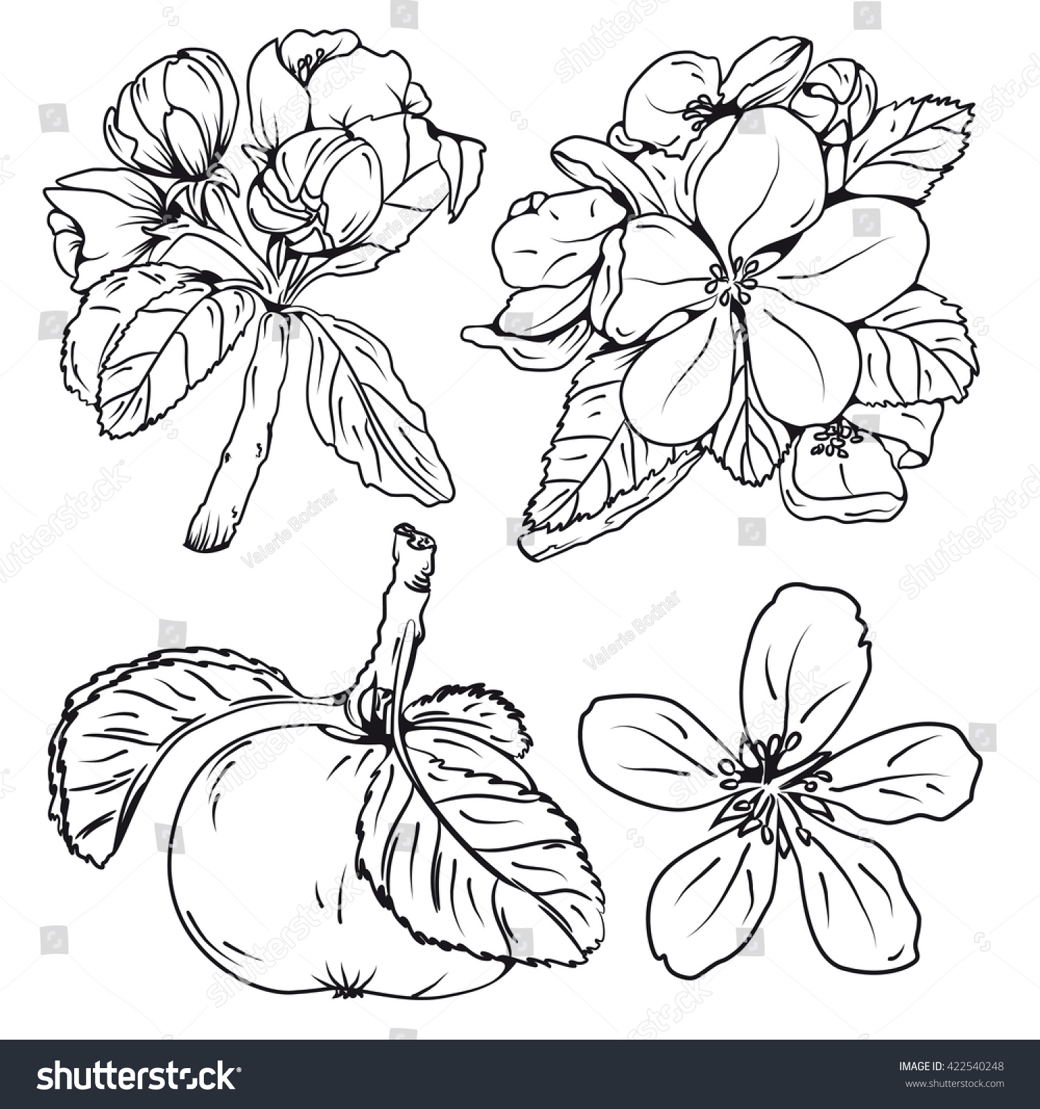 Set Blossom Apple Tree Branches Flower Stock Vector
