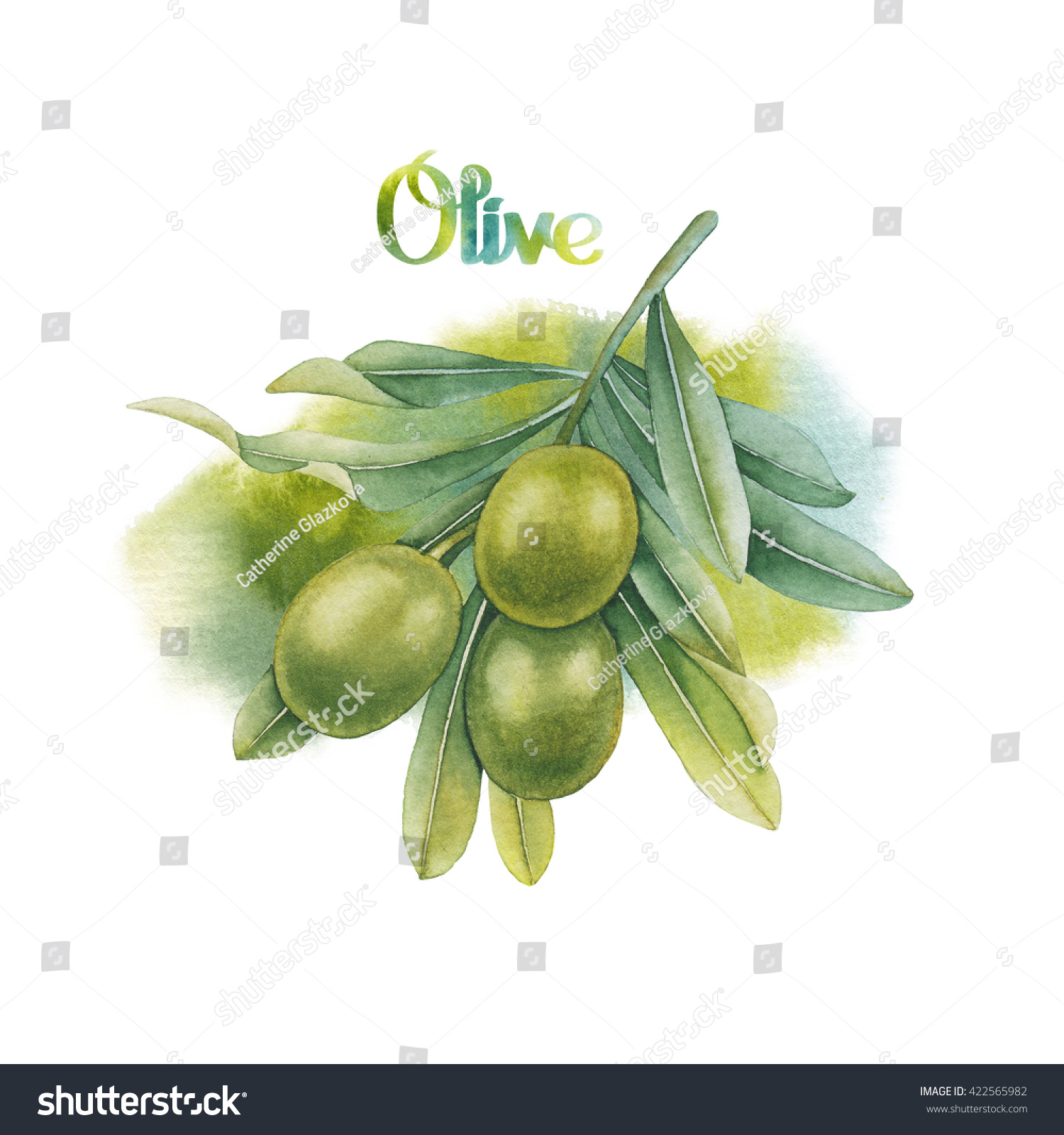 Watercolor Green Olive Branch Watercolor Texture Stock Illustration ...