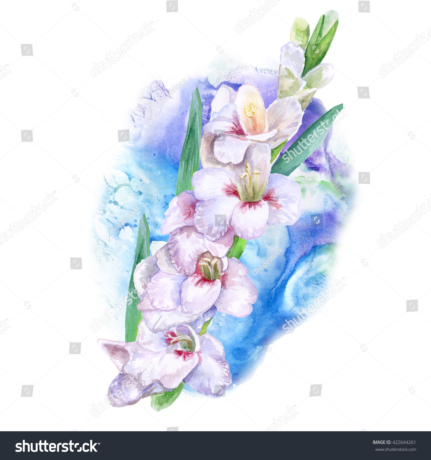 Watercolor Drawing Of Spring Gladiolus Flowers Hand Drawn Painting