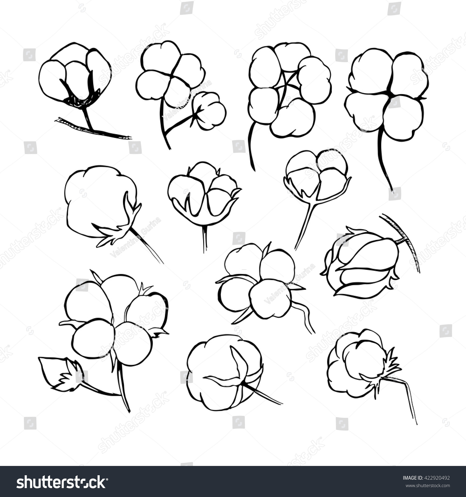 Top 28 How To Draw A Cotton Plant Step By Step Vector
