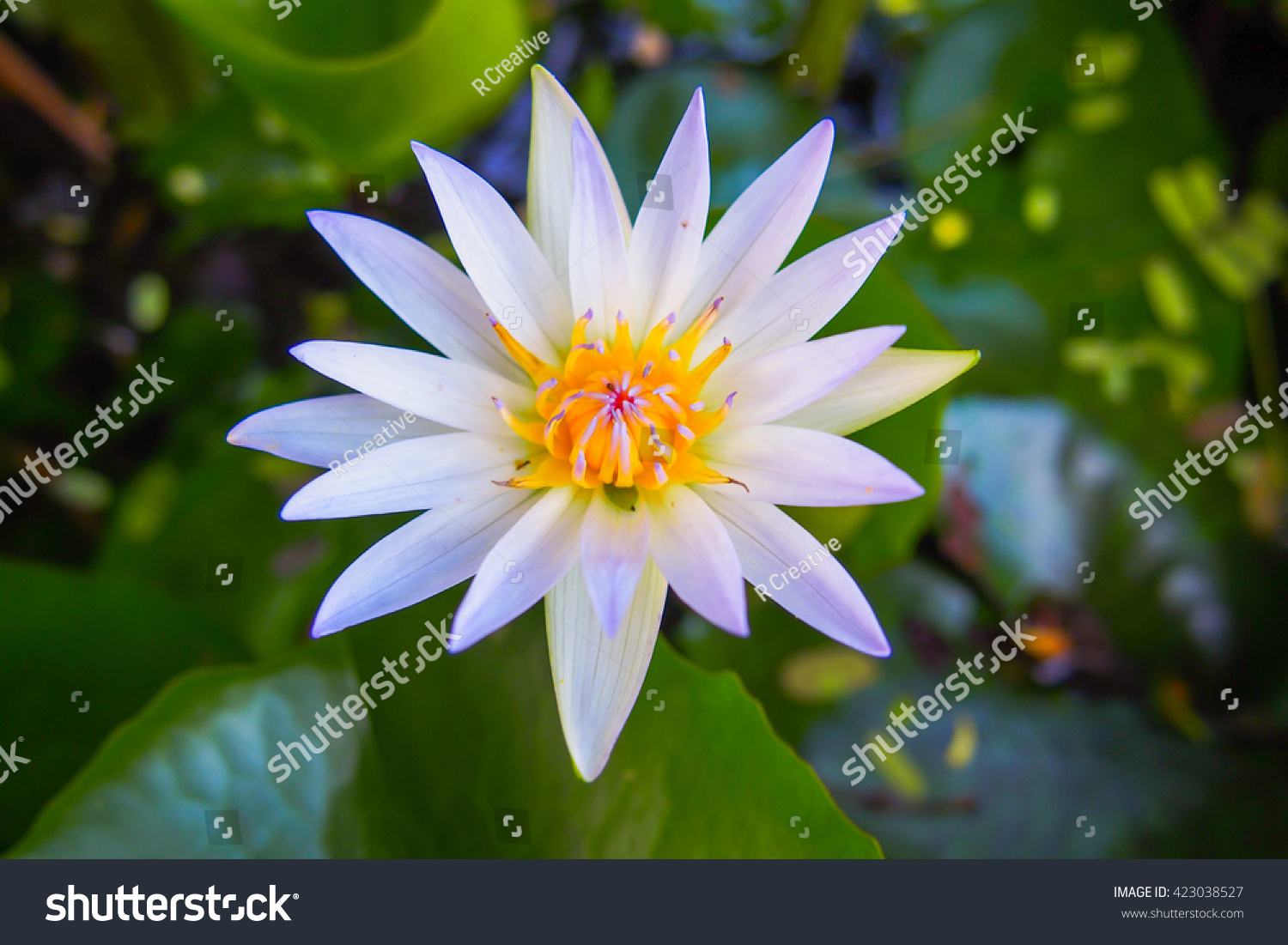 Top view lotus flower stock photo edit now 423038527 shutterstock top view of lotus flower izmirmasajfo