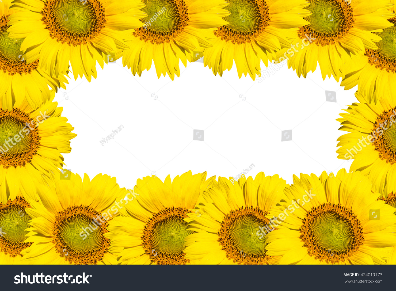 Sunflower big round yellow flowers copy stock photo royalty free sunflower big round yellow flowers copy space mightylinksfo