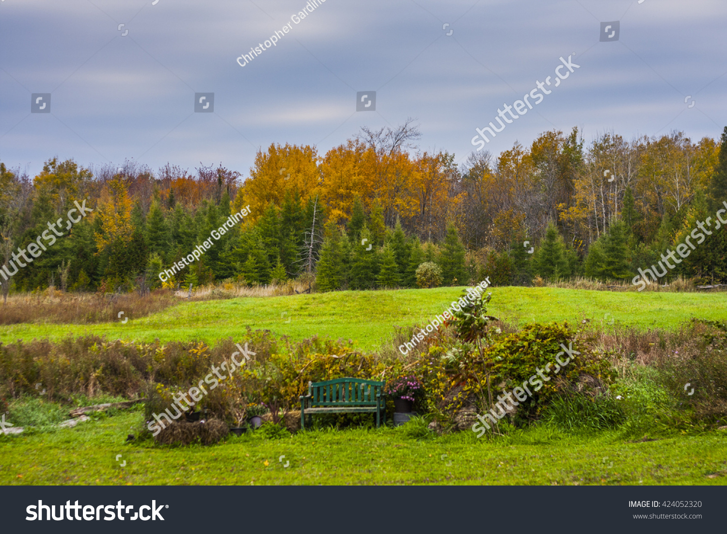 Trees Forest Changing Colour Autumn Stock Photo 424052320 - Shutterstock