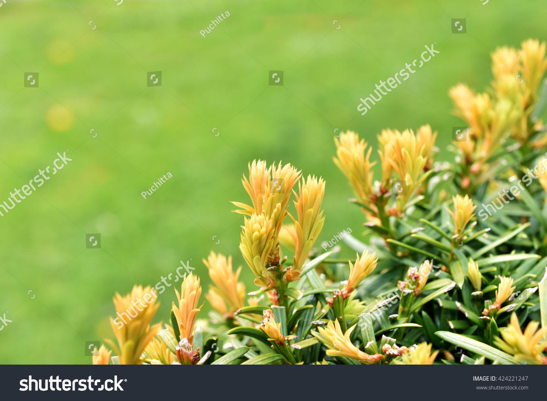 Autumn Flower Spring Season Copy Space Stock Photo Edit Now