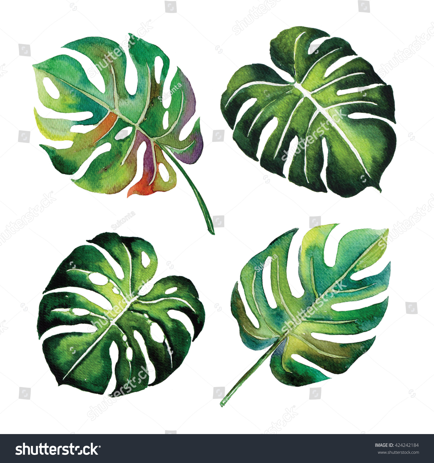 tropical split leaves plant botany watercolour stock illustration 424242184 shutterstock. Black Bedroom Furniture Sets. Home Design Ideas