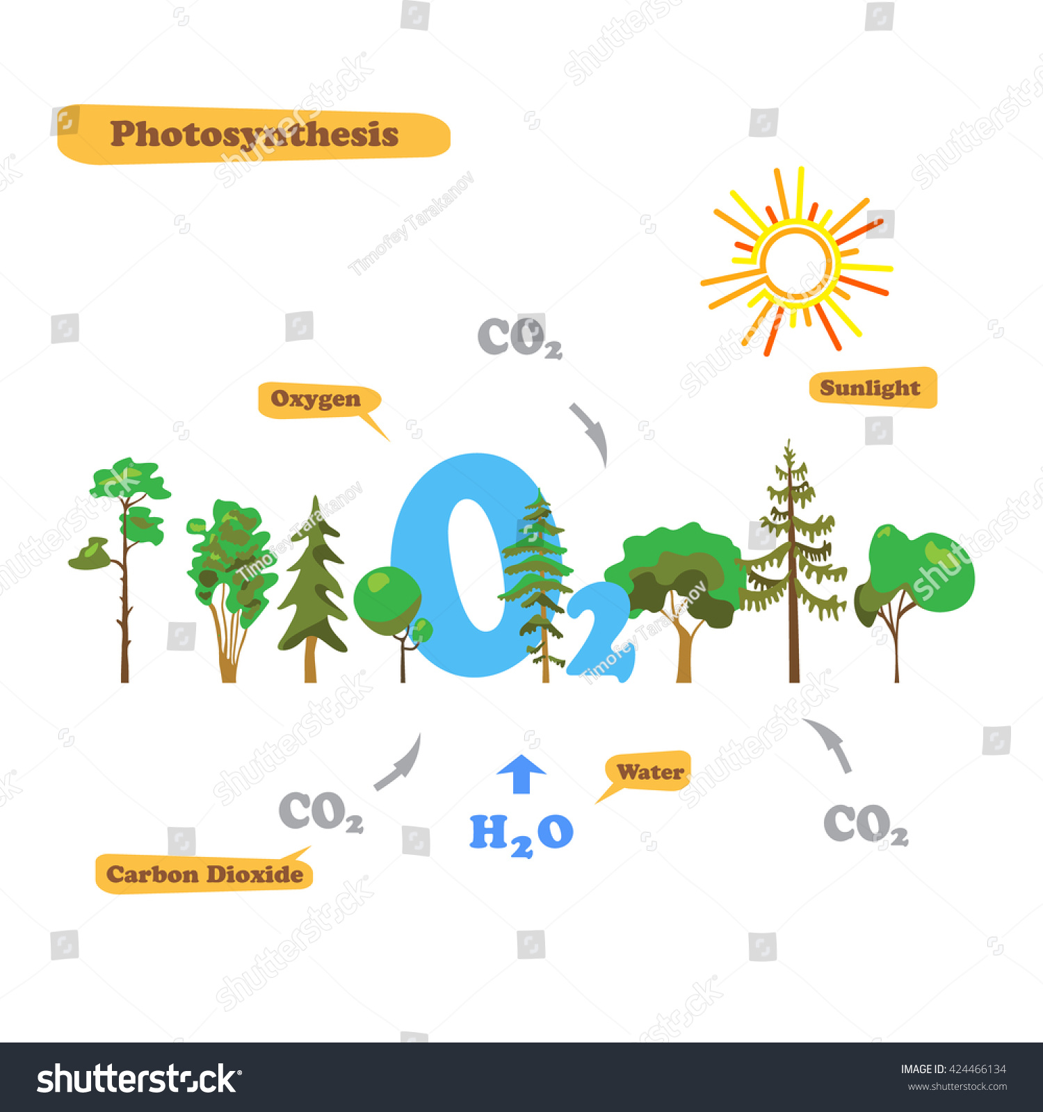 Illustration photosynthesis infographics photosynthesis process illustration of photosynthesis infographics of the photosynthesis process infographics in flat style pooptronica Choice Image