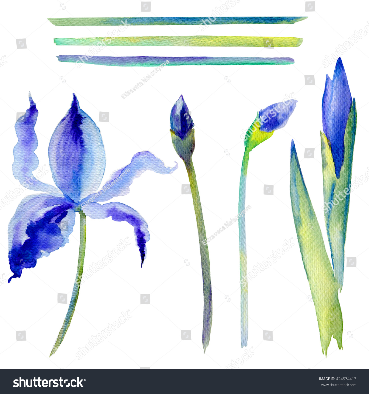 Watercolor iris flower bud hand drawn stock illustration 424574413 watercolor iris flower bud hand drawn botanical illustration isolated on white background for wedding invitation izmirmasajfo