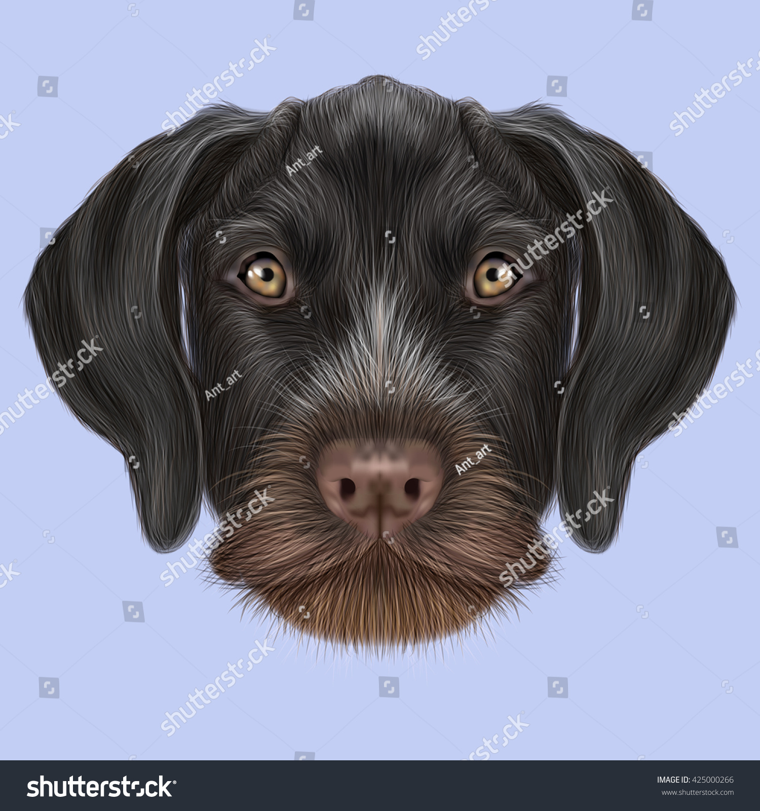 Illustrated Portrait German Wirehaired Pointer Dog Stock ...