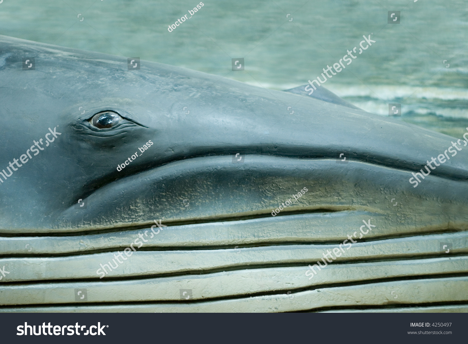 Blue And Sperm Whale