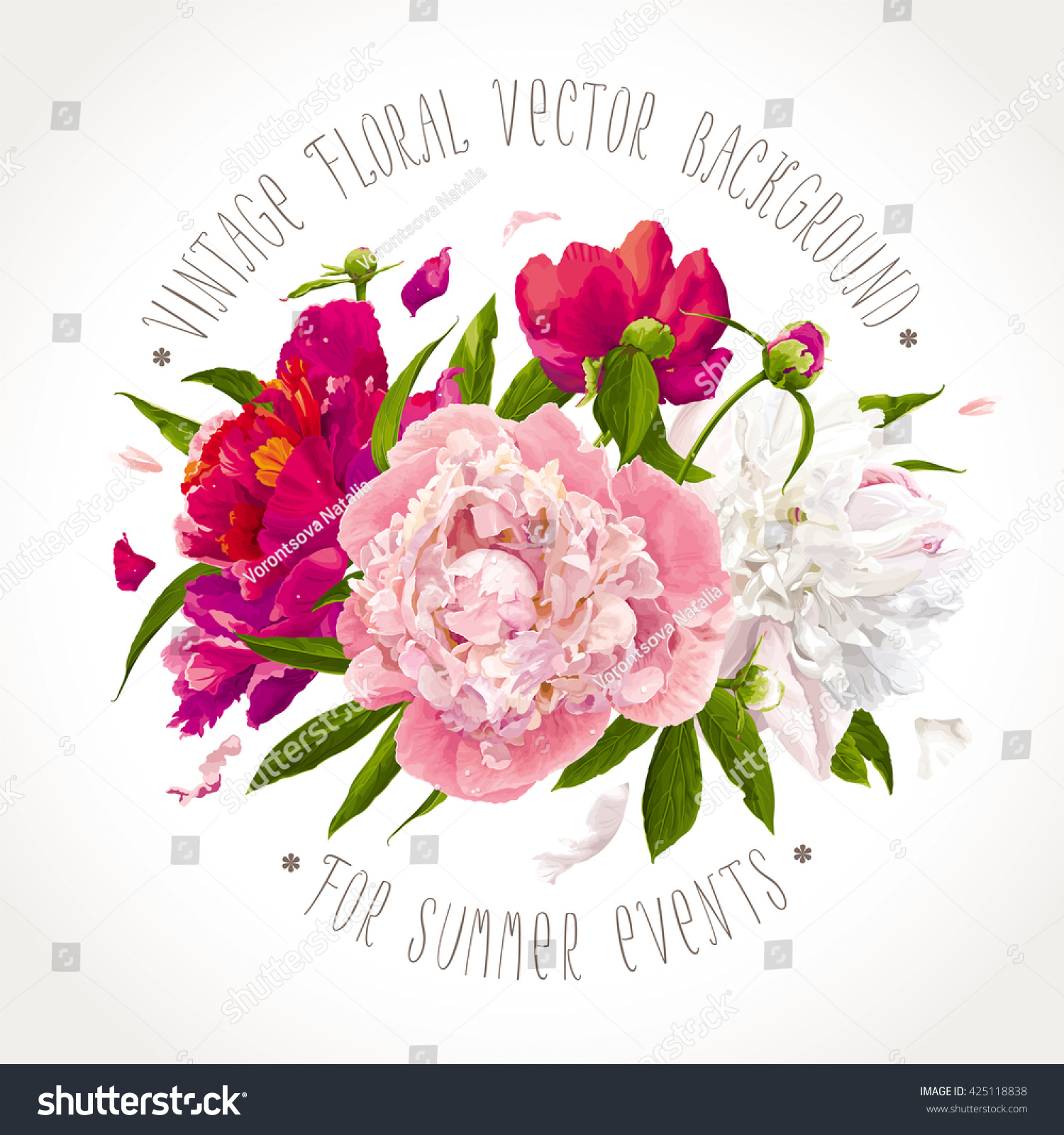 Luxurious Pink Red White Peony Flowers Stock Vector Royalty Free