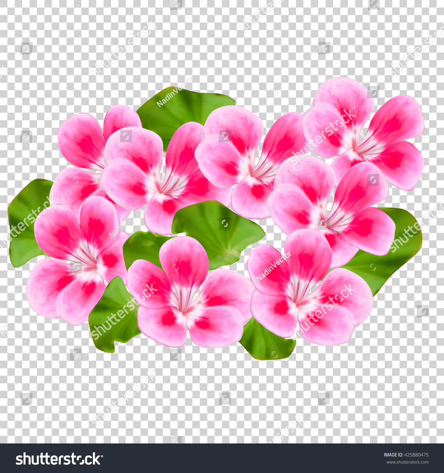 Pink Flowers On A Transparent Background