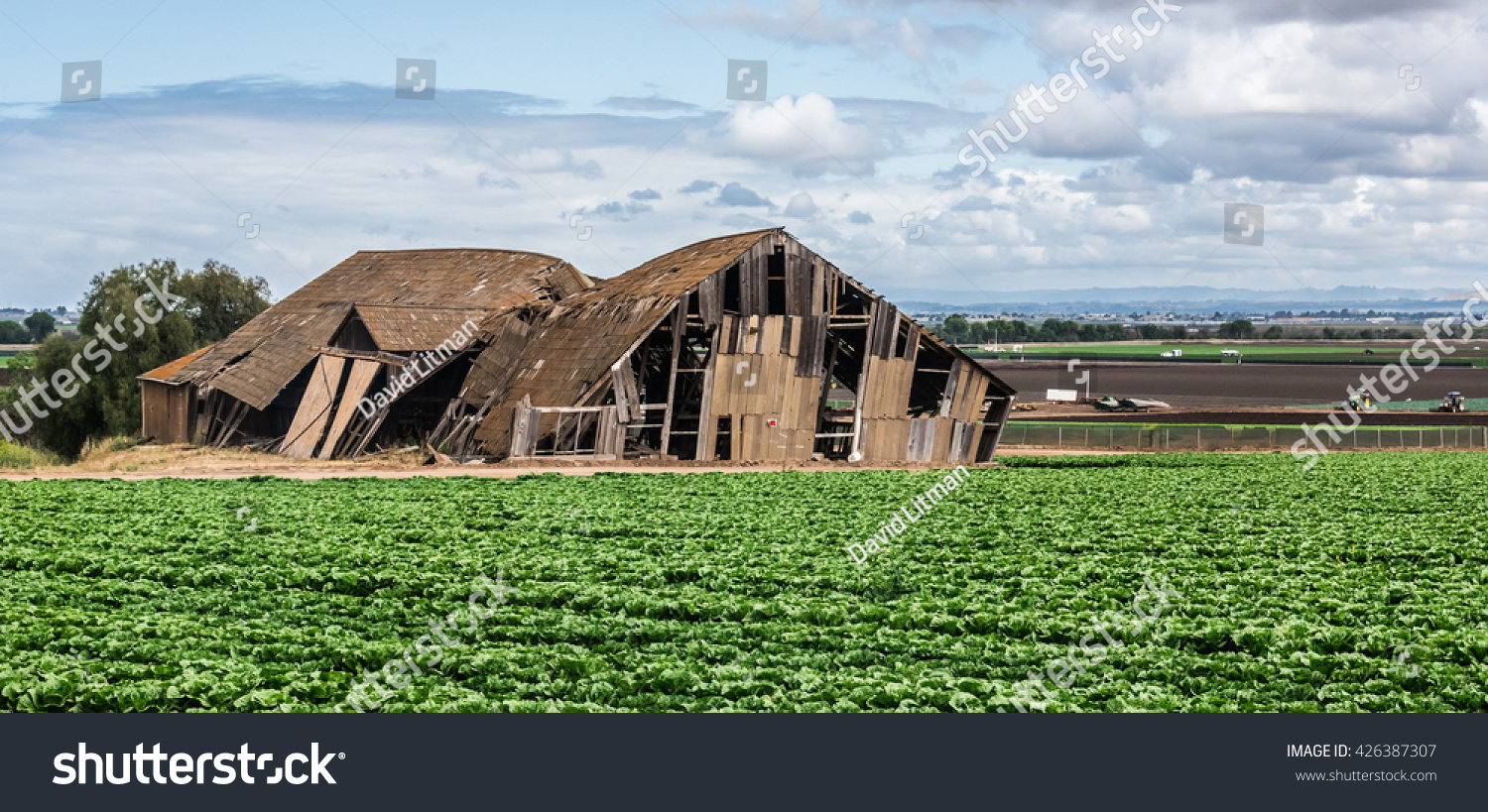An old abandoned partially collapsed barn stands next to a field of lettuce crops in the Salinas Valley of central California.