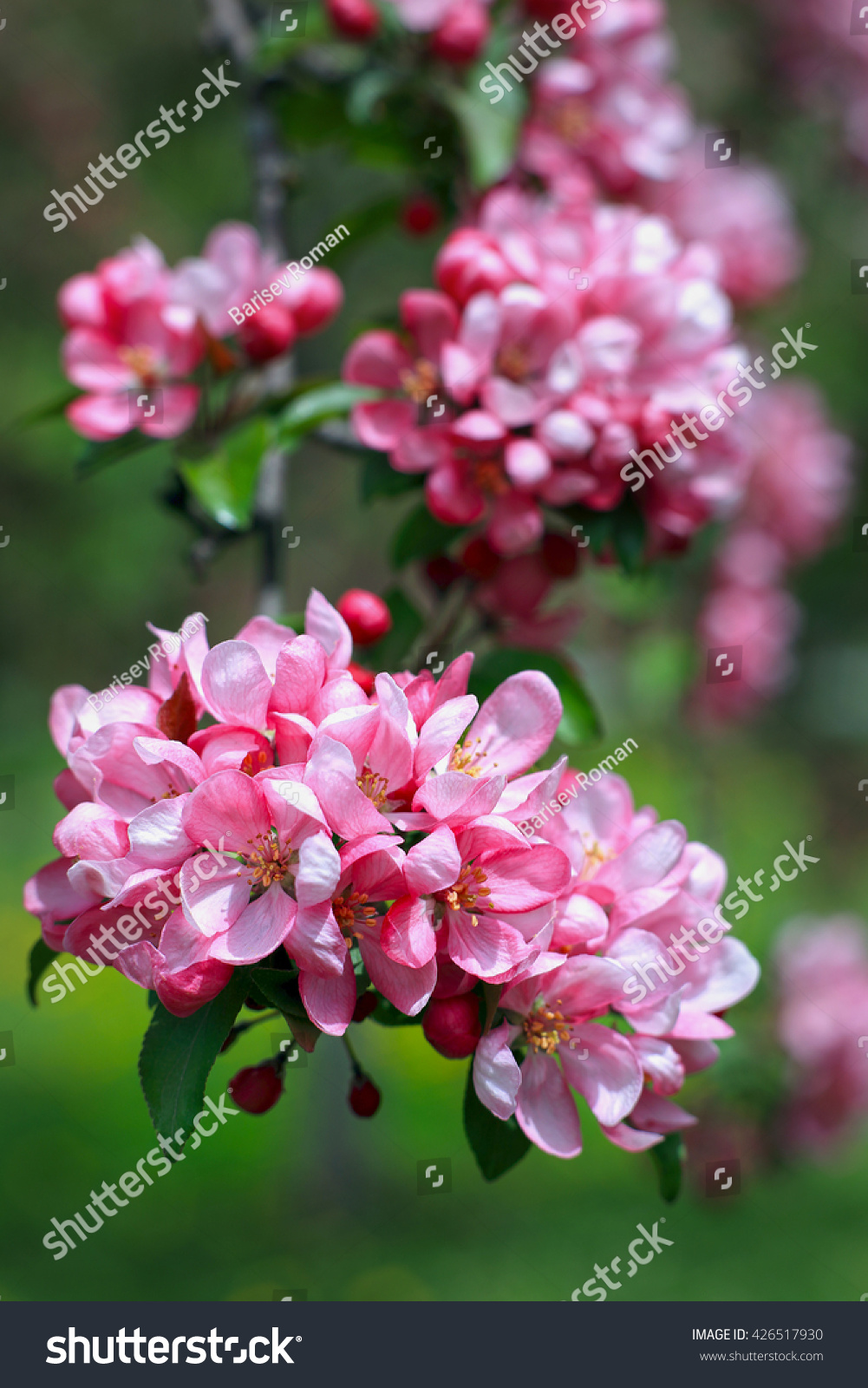 Spring flowers spring background spring background stock photo spring flowers spring background spring background with bokeh apple tree in blossom mightylinksfo
