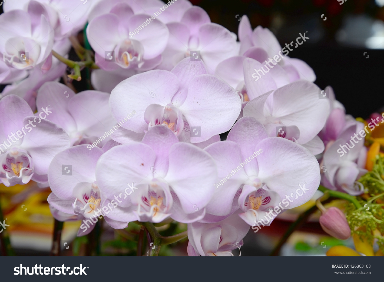 Orchid Flowers Beautiful Orchid Flowers Ez Canvas