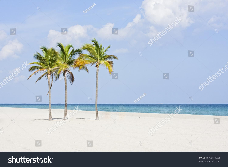 Tropical Paradise Beach Coast Sea Blue Emerald Ocean Palm: Tropical Paradise In Miami Beach Florida With Palm Trees