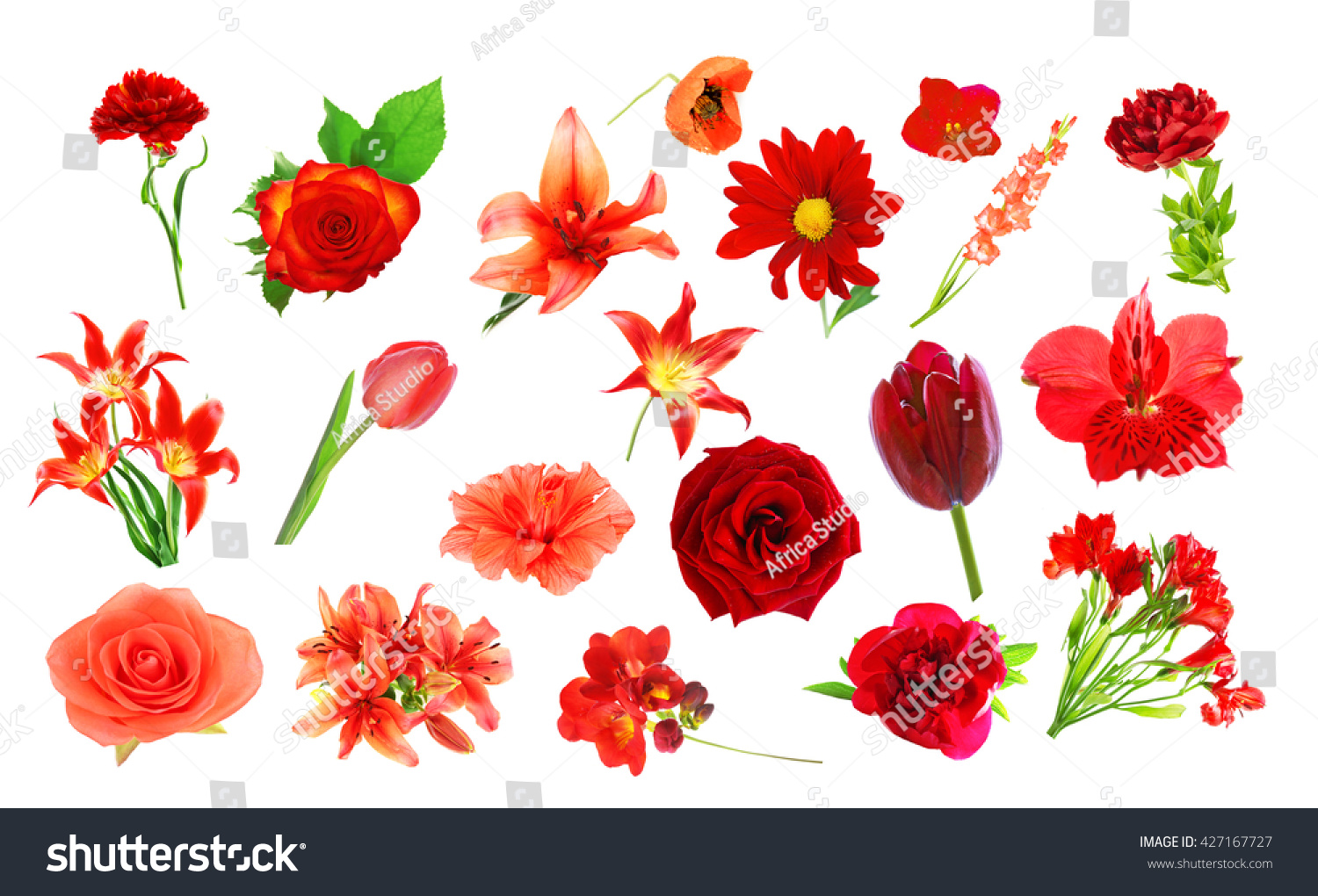 Collage Red Color Flowers Isolated On Stock Photo (Royalty Free ...