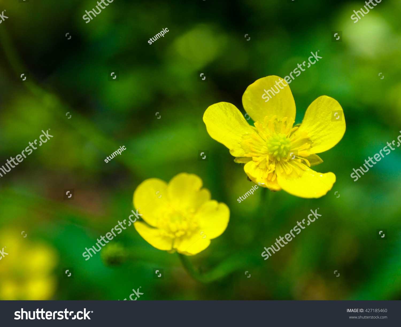 Tiny Yellow Flowers Stock Photo Edit Now 427185460 Shutterstock
