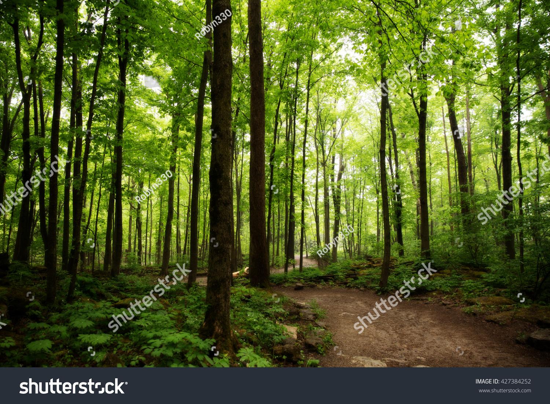 Crawford Lake Milton Ontario woods path #427384252