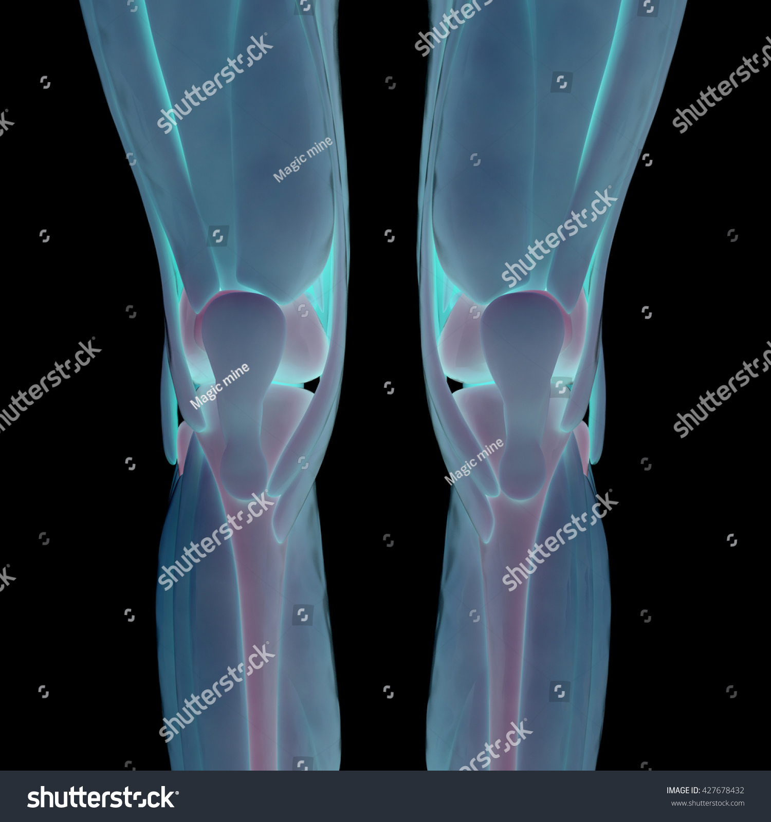 Human Muscle Body With Skeleton Anatomy 3d Ez Canvas