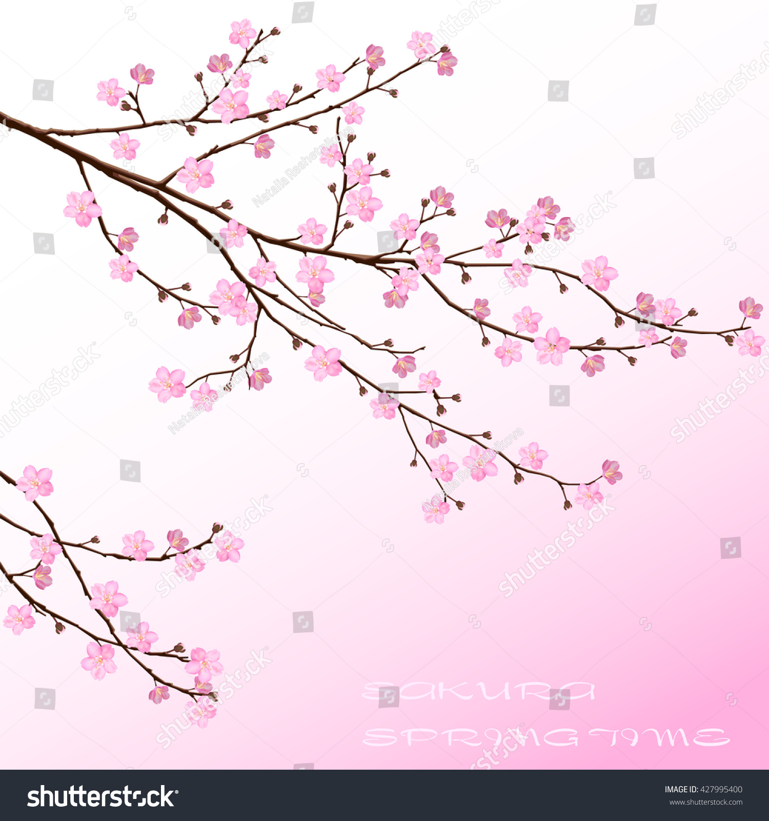Cherry blossom pink sakura flowers floral stock vector 427995400 pink sakura flowers floral design dhlflorist Images