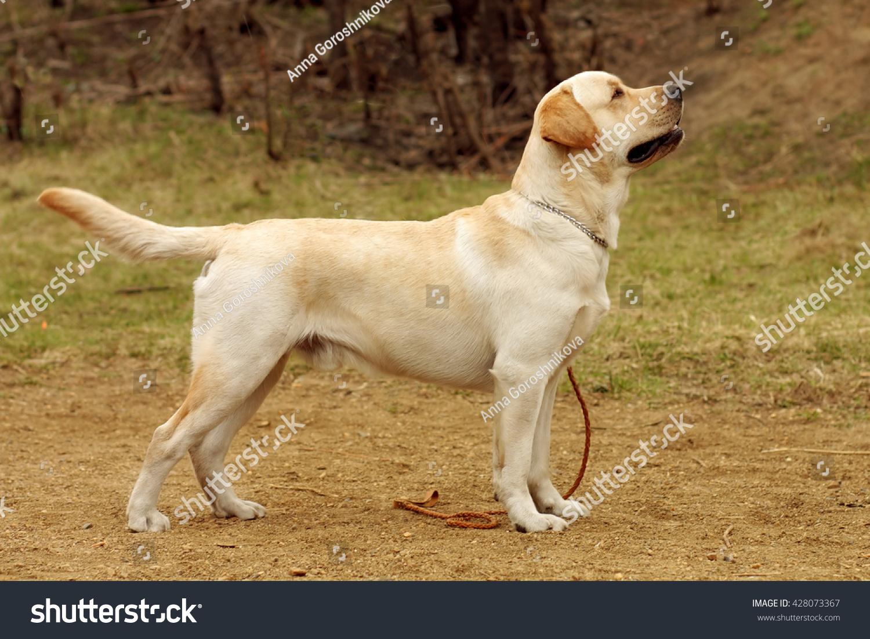 Sideways doggy
