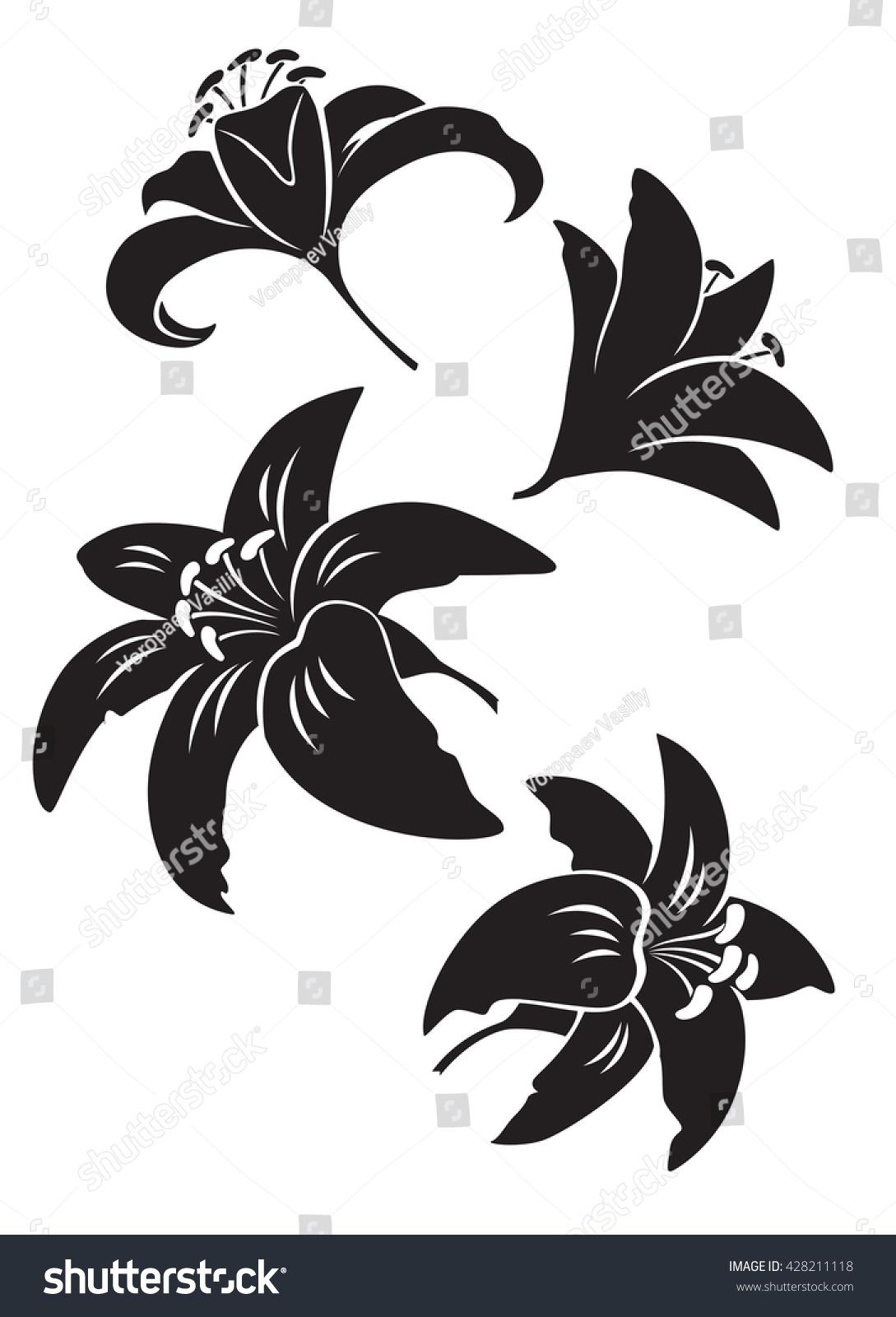 Lily Flower Stock Illustration 428211118 Shutterstock